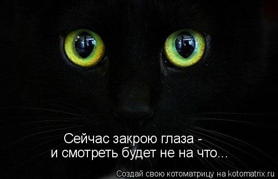 kotomatritsa_yz (550x355, 86Kb)