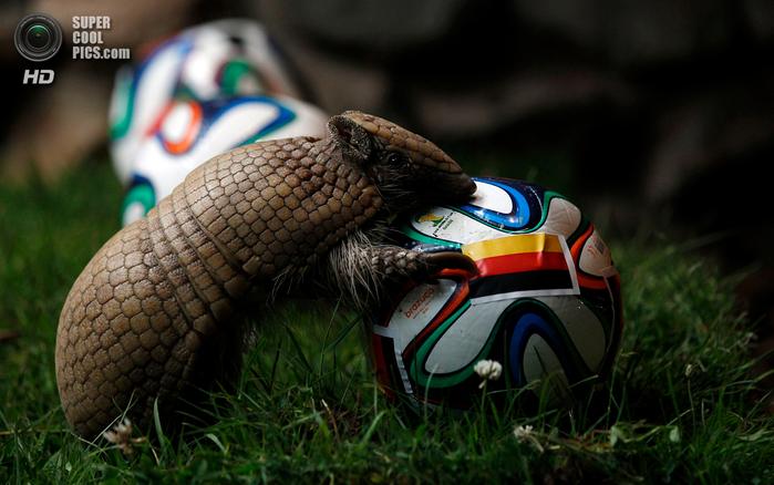животные и футбол фото 2 (700x438, 368Kb)