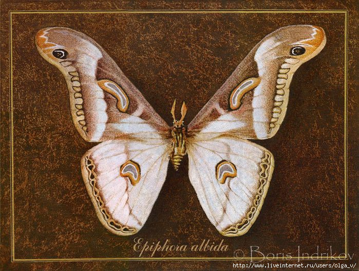 4964063_98062007_large_symbol_butterfly_10 (700x527, 296Kb)