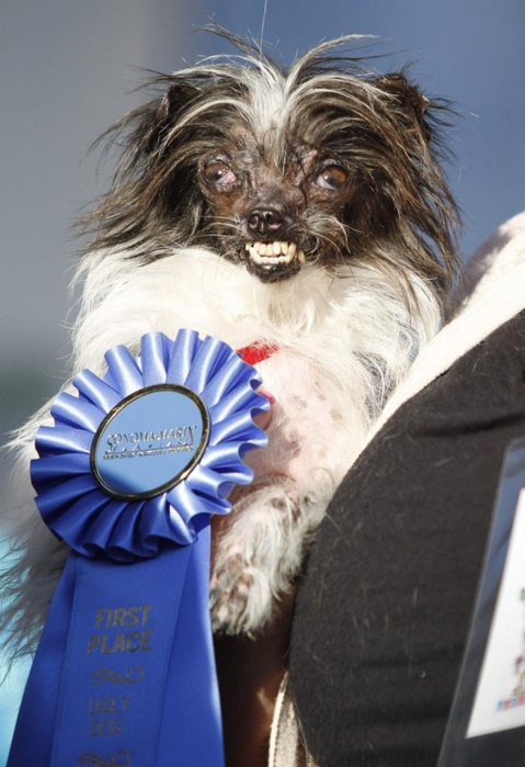 самая уродливая собака в мире 2 (479x700, 311Kb)