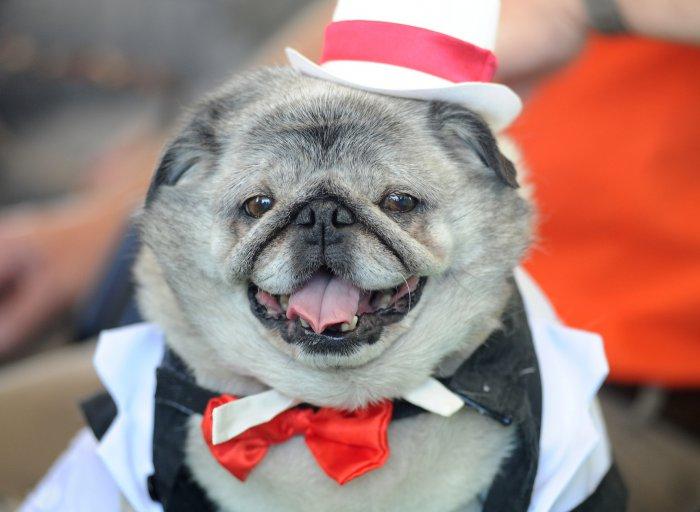 самая уродливая собака в мире 15 (700x512, 221Kb)