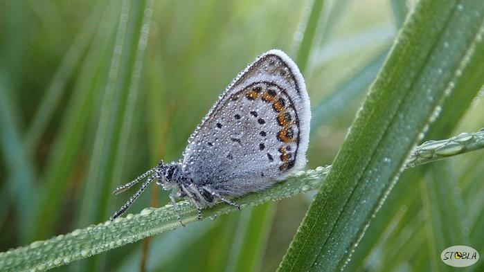 Бабочка Паника20140101 (700x393, 55Kb)