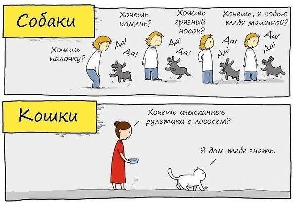 Чем отличаются коты и собаки
