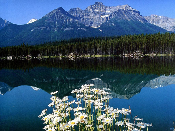 Landscapes - Hector Lake - Banff National Park, Canada (700x525, 469Kb)