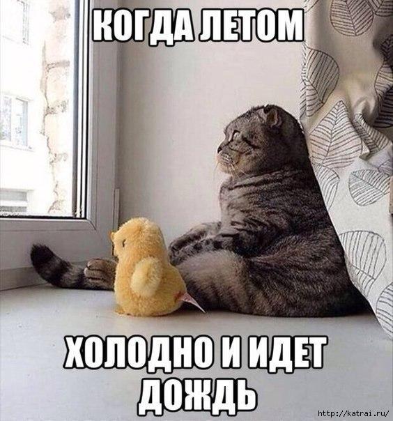 smeshnie_kartinki_140383431048 (564x604, 177Kb)