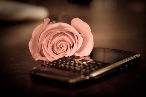 1320950283_beautiful-black-blackberry-cute-fashion-favim.com-175872 (500x334, 33Kb)