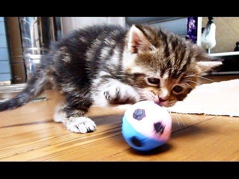 кошки позитив/3518263_hqdefault_1 (480x360, 36Kb)