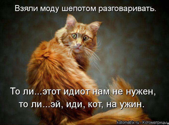 kotomatritsa_4C (699x520, 273Kb)