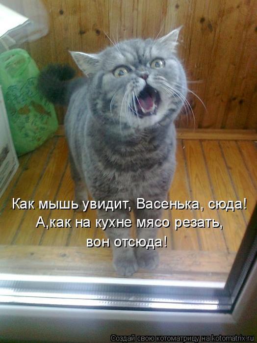 kotomatritsa_c- (524x700, 356Kb)