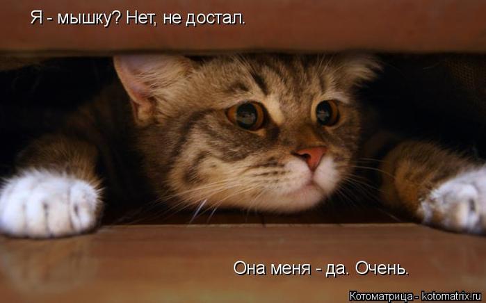 kotomatritsa_Jv (700x436, 228Kb)