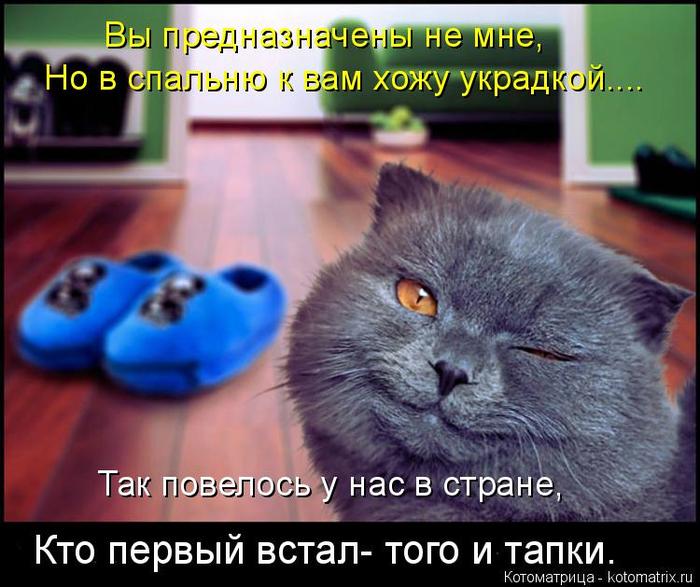 kotomatritsa_-O (700x587, 394Kb)