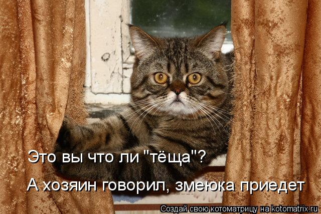 kotomatritsa_q3 (640x427, 316Kb)