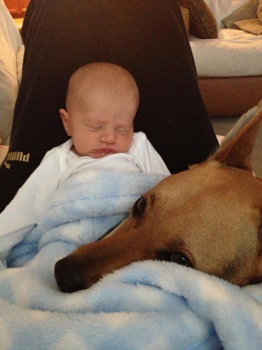 смешные фото детей и собак 3 (525x700, 366Kb)