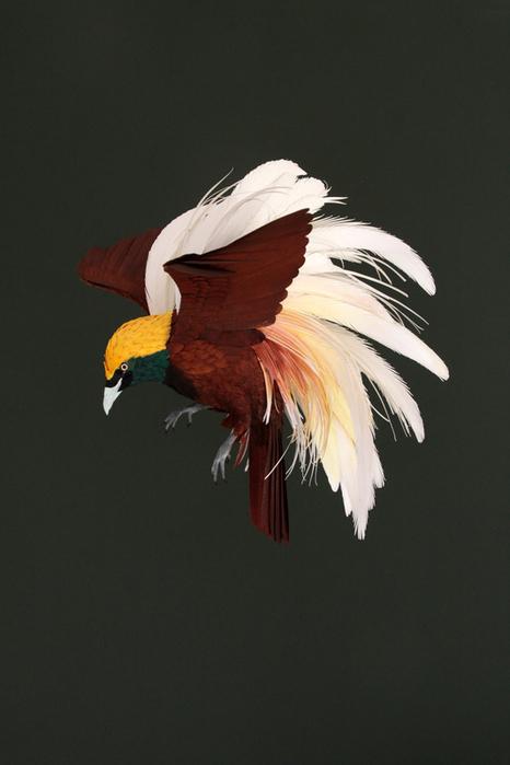 бумажные птицы Диана Белтран Херрера 6 (466x700, 270Kb)