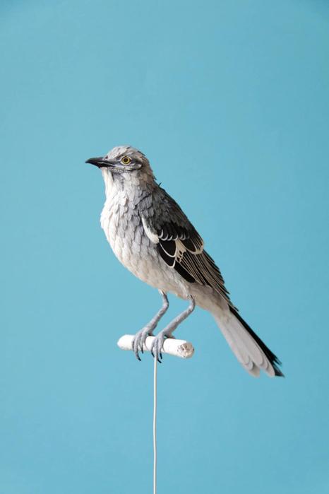 бумажные птицы Диана Белтран Херрера 8 (466x700, 144Kb)