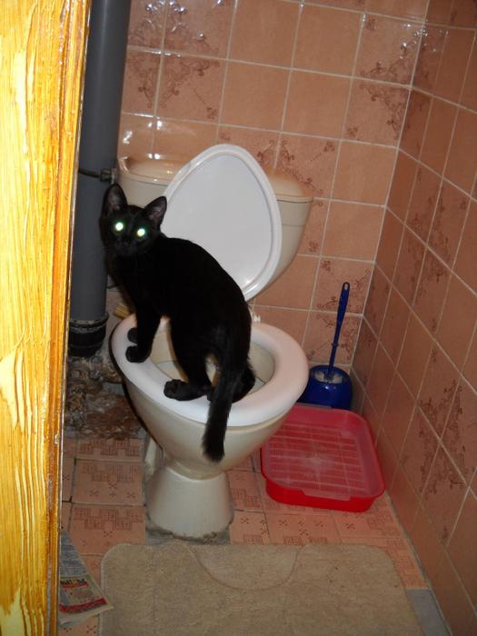 Почему я часто хожу по маленькому в туалет
