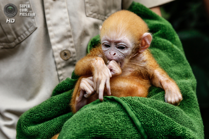 детеныши животных обезьяны фото 1 (700x466, 447Kb)