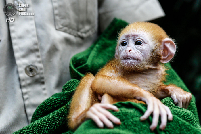 детеныши животных обезьяны фото 4 (700x466, 400Kb)