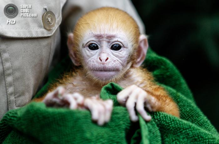 детеныши животных обезьяны фото 5 (700x459, 375Kb)