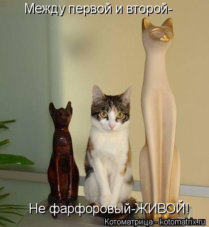 kotomatritsa__ (421x458, 108Kb)