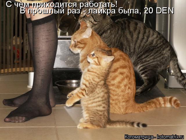 kotomatritsa_a (1) (640x481, 224Kb)
