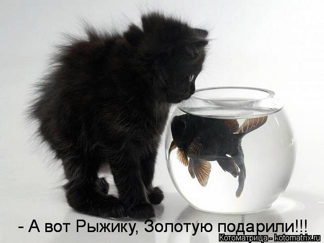 kotomatritsa_B (650x488, 112Kb)