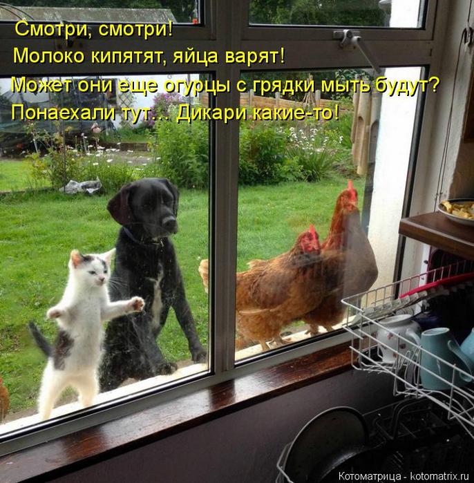 kotomatritsa_BW (686x700, 529Kb)