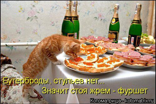 kotomatritsa_l_ (500x334, 215Kb)