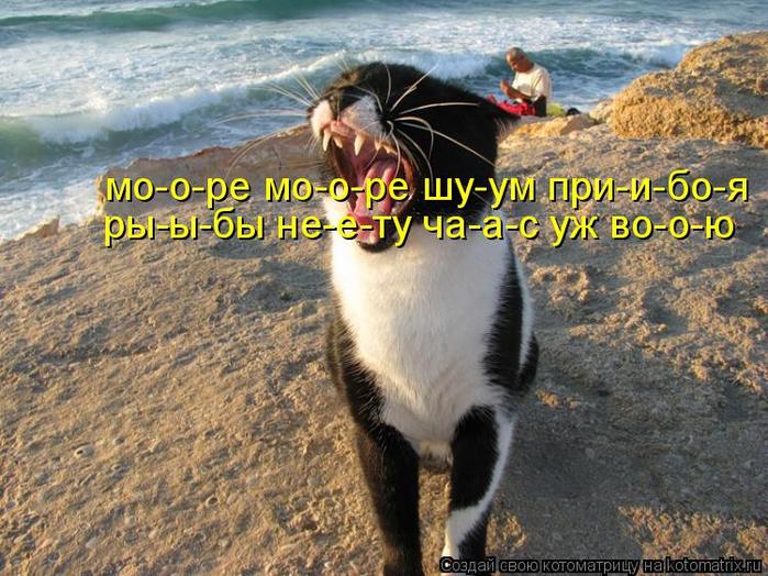 kotomatritsa_Xy (700x524, 466Kb)