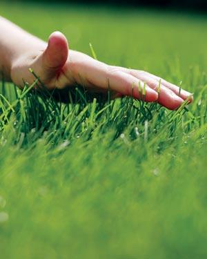 трава (300x375, 91Kb)