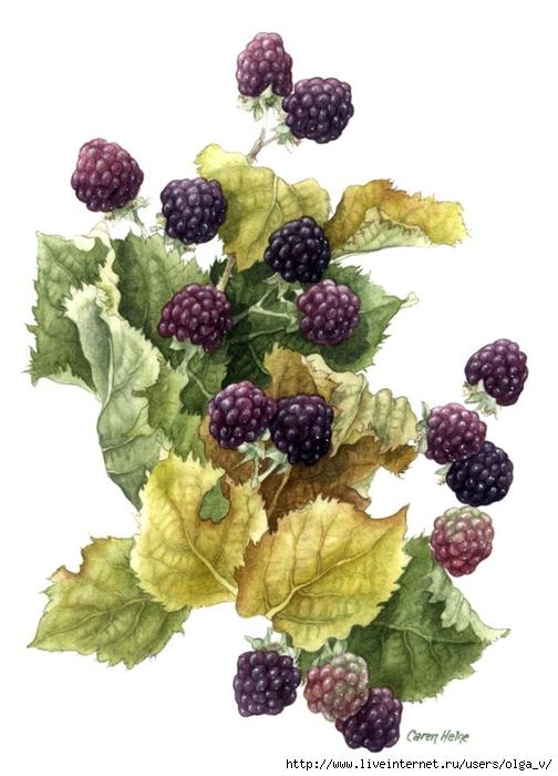 Декупаж картинки ягоды фрукты