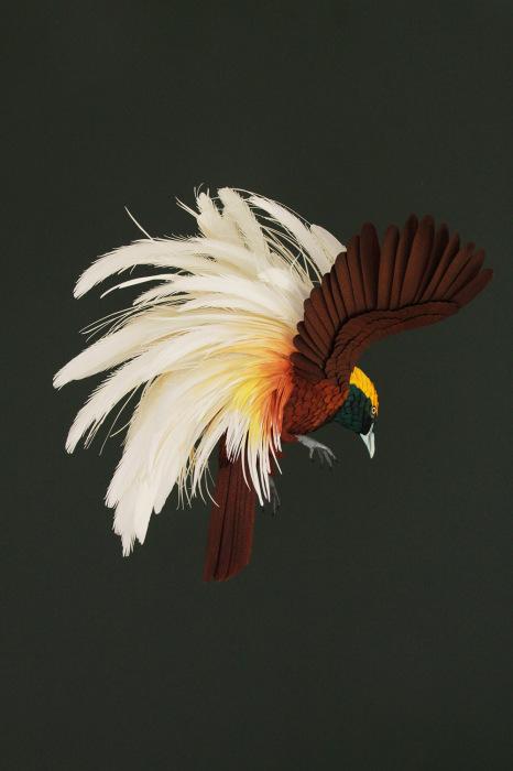 birds-3 (466x700, 214Kb)