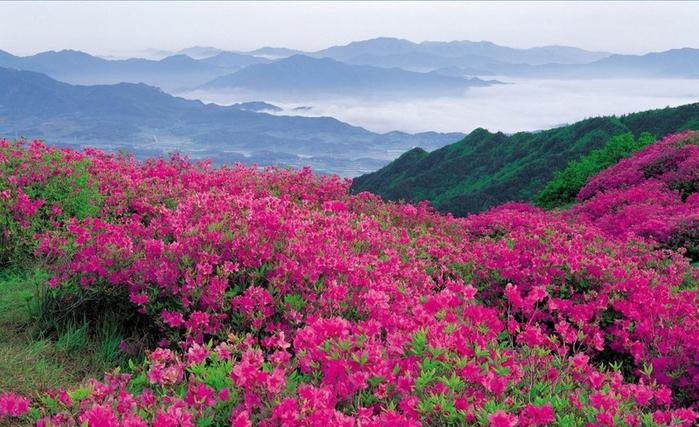 долина роз скачать торрент - фото 10