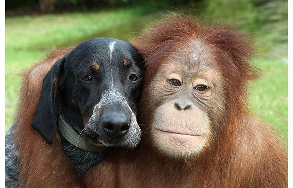 animal-best-friends--large-msg-136633439208 (580x374, 131Kb)