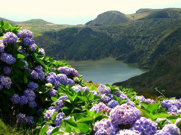 Azores_15 (700x525, 101Kb)