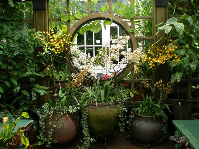 ботанический сад сан-франциско фото 5 (700x525, 507Kb)