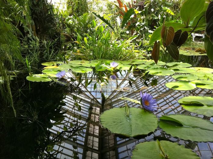 ботанический сад сан-франциско фото 7 (700x522, 506Kb)