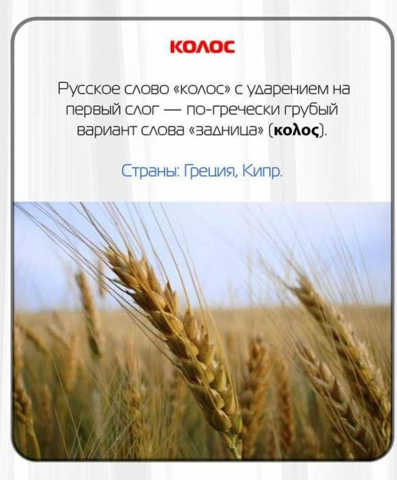 slova-rugatelstva-6 (579x700, 208Kb)