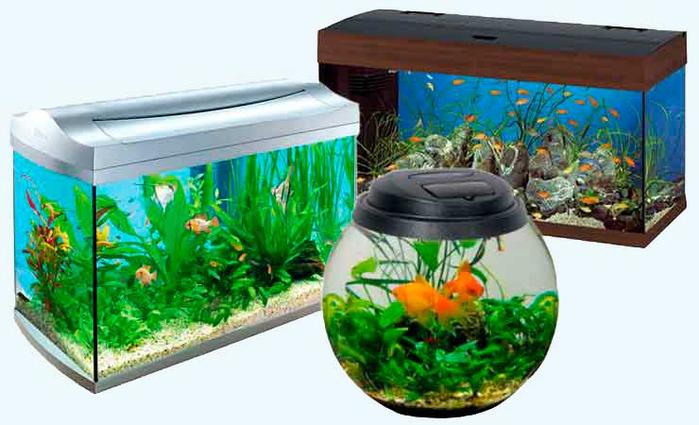 akvarium (700x425, 291Kb)