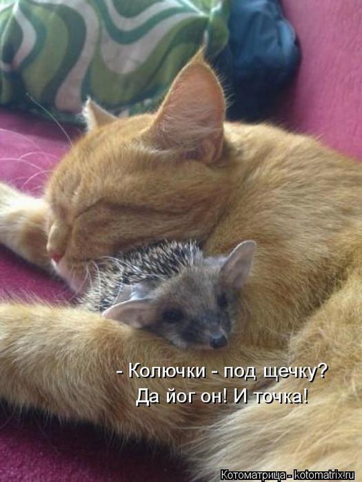 kotomatritsa_J (525x700, 50Kb)