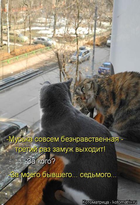 kotomatritsa_KI (478x700, 61Kb)