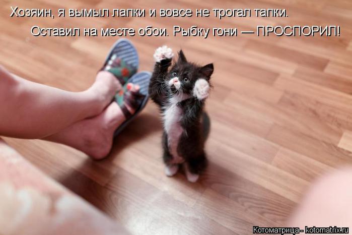 kotomatritsa_pU (700x466, 39Kb)