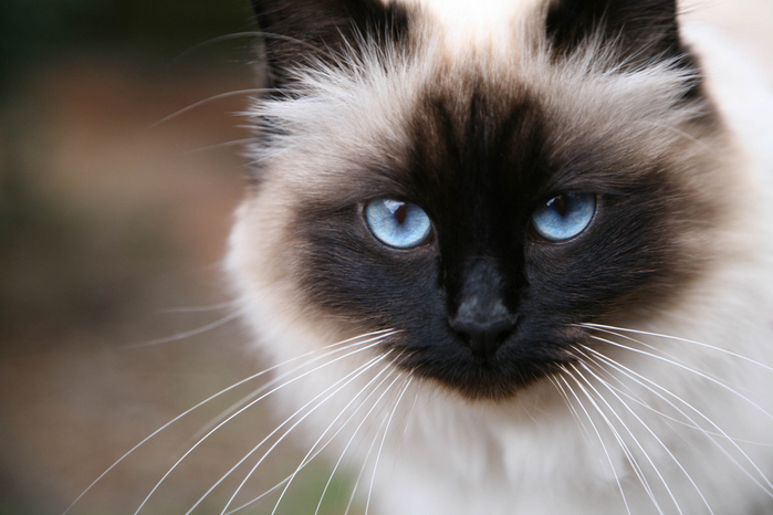 Стерилизация кошек когда лучше делать - 2ad4