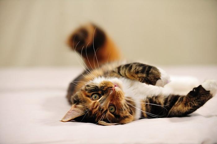 стерилизация кошек на дому 2 (700x466, 187Kb)