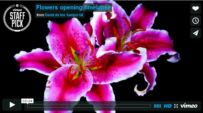 Цветут цветы   в блоге Blogbaster.orgыы (685x383, 347Kb)