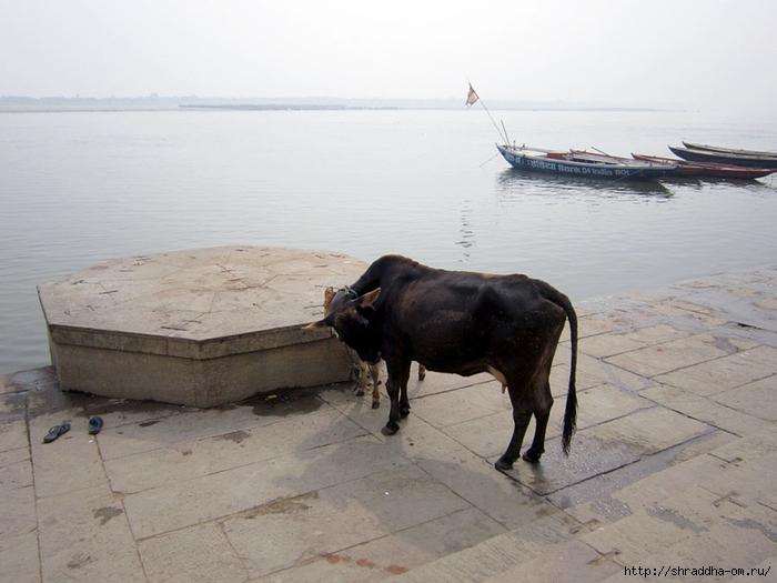 India Varanasi 2014 (19) (700x525, 214Kb)