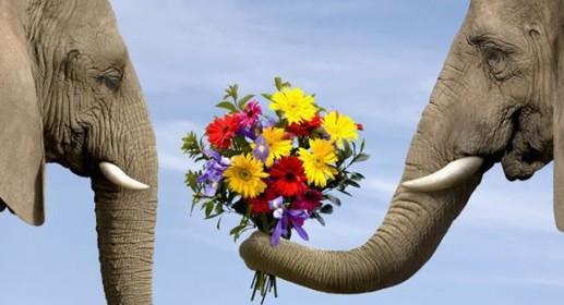 слон.цв. (517x280, 39Kb)
