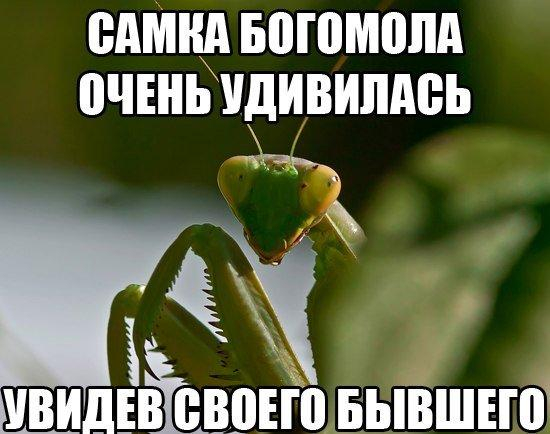 smeshnie_kartinki_140535805355 (550x434, 187Kb)
