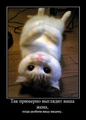 5680197_567Vashazhenarazbivshayamashinu (359x500, 39Kb)