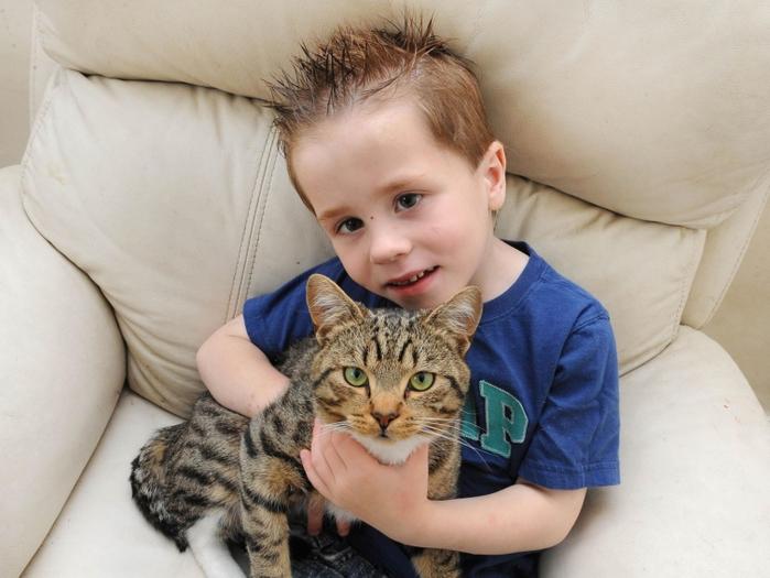 кот защитил ребенка 1 (700x525, 333Kb)